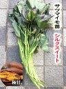 【2021年 予約商品】シルクスイート 10本 サツマイモ切り苗(登録品種 HE306 海外持ち出し禁止)【芋ズル】【野菜…