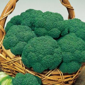 キャッスル ブロッコリー種子 1.3ml 中生種 【野菜種子】 【タキイ種苗】【ブロッコリーの種】