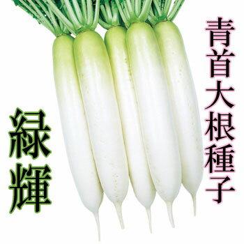 大根種子 小袋 緑輝 18ml(約460粒)【郵便送料110円〜】【タキイ種苗】【大根の種】【野菜種子】