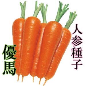 【送料無料】ニンジン種子 優馬 コート10000粒 【タキイ種苗】【人参の種】【野菜種子】