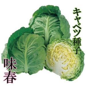 味春 キャベツ種子 1.4ml 極早生種 良質系【野菜種子】 【タキイ種苗】【極早生キャベツ】【キャベツの種】
