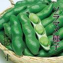 仁徳一寸 ソラマメ種子 50ml 小袋種子 【郵便送料110円〜】【タキイ種苗】【野菜種子】