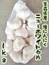 【予約商品】青森県産ニンニク種子 ニューホワイト6片 Lサイズ(kg‥12個〜14個) 1kg×ネット詰 【種にんにく】【青森県・・・