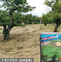 【草マルチ、防草効果】ナギナタガヤ 1kg 種子