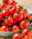 【郵便送料無料】千果99 ミニトマト 1000粒 【トマト種】【タキイのタネ】【野菜の種】