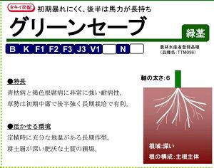 グリーンセーブ トマト用台木 種子 1000粒 農水省登録品種(品種名 TTM-056) 【タキイ交配】【台木用種子】