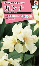 花タネ NL300 カンナ トロピカル ホワイト 小袋 [FCA127]【花の種】【タキイのタネ】【ガーデニング】