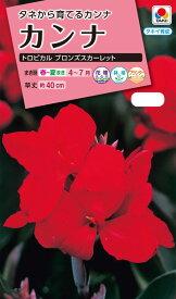 カンナ NL300 カンナ トロピカル ブロンズスカーレット 小袋 [FCA211] 【花の種】【タキイのタネ】【ガーデニング】