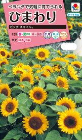 花種 NL300 ひまわり ビッグスマイル 小袋 [FHM313]【花の種】【タキイのタネ】【ガーデニング】