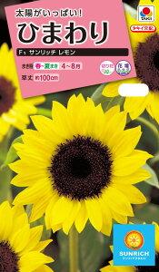 花種 NL300 ひまわり F1 サンリッチ レモン 小袋[FHM511] 【花の種】【タキイのタネ】【ガーデニング】
