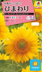 花種  NL300 ひまわり F1 サンリッチ フレッシュ オレンジ 小袋 [FHM515]【花の種】【タキイのタネ】【ガーデニング】