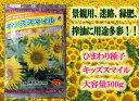 【景観・緑肥用ひまわり】キッズスマイルプラス 500g 【矮性ひまわり】【タキイ種苗】