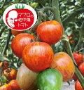 マロウの地中海トマト ベネチアンサンセット 中玉トマト種子 8粒【イタリアトマト】【野菜の種】