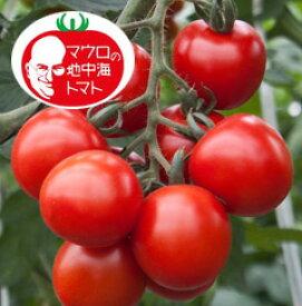 マロウの地中海トマト エスプロッソ 中玉トマト種子 100粒【イタリアトマト】【野菜の種】【郵便利用で送料無料】