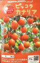 マロウの地中海トマト ピッコラカナリア ミニトマト種子 8粒【イタリアトマト】【野菜の種】
