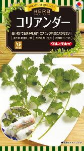 ハーブ種子 小袋 コリアンダー(パクチー、香菜)3ml【送料110円〜】【タキイのタネ】【ハーブの種】
