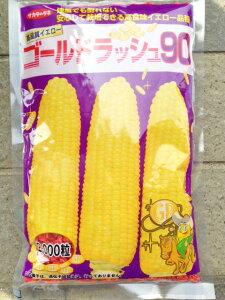 【送料無料】ゴールドラッシュ90 スイートコーン種子 2000粒【スイートコーン種】【サカタのタネ】【野菜の種】