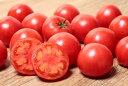 【郵便送料無料】促成、抑制栽培向け品種 ハウスパルト 大玉トマト種子 1000粒【トマト種】【サカタのタネ】【野菜…