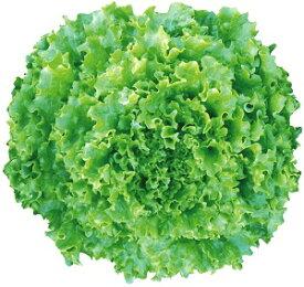 【送料無料】【雪印】フレアベル 非結球レタス コートL5000粒  【レタス種】【野菜の種】