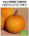 ハロウィンカボチャ 種子 3ml 【南瓜の種】【タキイのタネ】【送料110円〜】【野菜の種】
