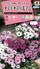 花タネ NL300 オステオスペルマム パッションミックス 小袋 [FOM110] 【花の種】【タキイのタネ】【ガーデニング】