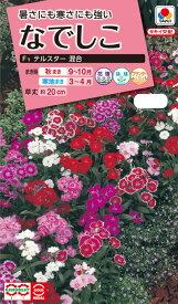 花タネ NL300 なでしこ F1 テルスター 混合 小袋 [FND539]【花の種】【タキイのタネ】【ガーデニング】