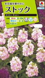 花種 NL200 ストック キスミー チェリー 小袋 [FST713]【花の種】【タキイのタネ】【送料110円〜】【ガーデニング】