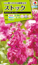花種 NL200 ストック クリスマス ルージュ 小袋 [FST324]【花の種】【タキイのタネ】【送料110円〜】【ガーデニング】