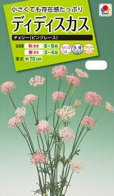 花種 NL200 ディディスカス チェリー(ピンクレース) 小袋 [FZZ456]【花の種】【タキイのタネ】【送料110円〜】【ガーデニング】