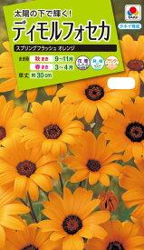 花種 NL200 ディモルフォセカ スプリングフラッシュ オレンジ 小袋 [FZZ623]【花の種】【タキイのタネ】【送料110円〜】【ガーデニング】