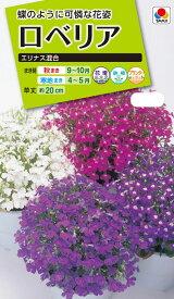 花種 NL200 ロベリア エリナス混合 小袋 [FLO119]【花の種】【タキイのタネ】【送料110円〜】【ガーデニング】