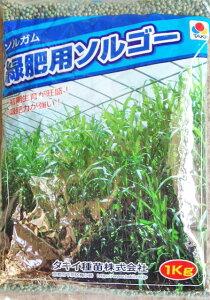 緑肥用種子 ソルガム 緑肥用ソルゴー 1kg【緑肥の種】【タキイのタネ】【ガーデニング】