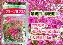 【送料無料】景観用コスモス センセーション混合 1kg×5袋【花の種】【緑化事業】