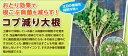 緑肥用大根種子 こぶ減り大根 1kg【緑肥、景観用の種】【タキイのタネ】
