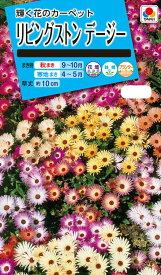 花種 NL150 リビングストンデージー 小袋 [FZZ740]【花の種】【タキイのタネ】【送料110円〜】【ガーデニング】