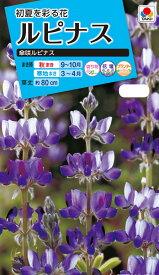 花種 NL150 ルピナス 傘咲ルピナス 小袋 [FRP111]【花の種】【タキイのタネ】【送料110円〜】【ガーデニング】