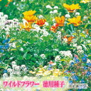 景観用ワイルドフラワー ハイドロカラーミックス 100g(約100平米)【花の種】【タキイのタネ】【ガーデニング】