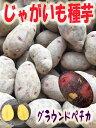 じゃがいも種子 グラウンドペチカ芋(デストロイヤー) 1kg サイズ混合 【馬鈴薯種】【種芋】【検品合格済】