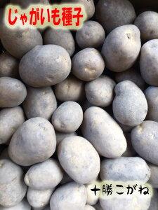 たねいも 十勝こがね  じゃがいも種子  1kg 混合サイズ 【馬鈴薯種】【種芋】【検品合格済】