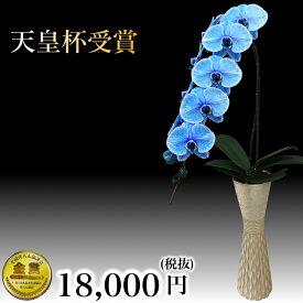 ブルーエレガンス 一本立ち 珍しい胡蝶蘭 おしゃれなインテリアとしても使える高級花瓶セット正月