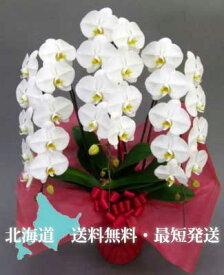 北海道専用 胡蝶蘭3本立ち母の日