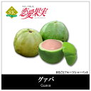 Guava box20180809 01