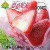 ☆ SALE 가격 ☆ 통째로 딸기 우유 셔 벗! (사랑의 열매) 1 개의 21g× 100 립 세트!