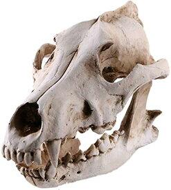 骨 標本 模型 骨格 頭蓋骨 狼 ドクロ 骸骨 スカル 髑髏 動物 オブジェ 置物 レプリカ インテリア