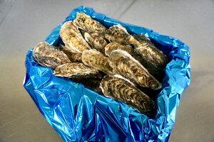 殻付き牡蠣(生食用)北海道厚岸湾仙鳳趾(せんぽうし)産 マメサイズ小箱3Kg(1Kg→約20〜25個)