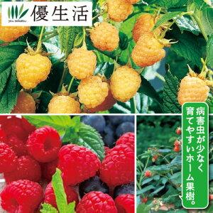 木苺 ラズベリー 2種2株