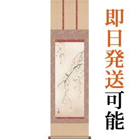 掛軸(掛け軸) 春用 桜花 西尾香悦作 尺三立 約横44.5cm×縦164cm g4148