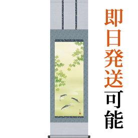 掛軸(掛け軸) 夏用 楓に鮎 長江桂舟作 尺三立 約横44.5cm×縦164cm g4151