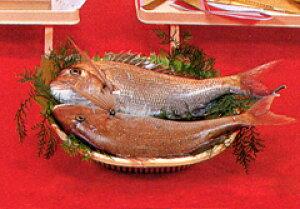 活鯛(2尾) 3kg以上(約60cm)