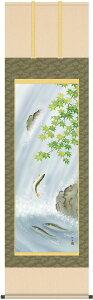 掛軸(掛け軸) 夏用 楓に鮎 長江桂舟作 尺五立 約横54.5cm×縦190cm【送料無料】g6049 KZ3A3-158